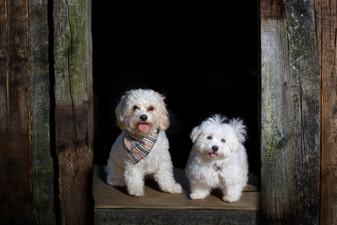 Image result for set up a photo booth for dog